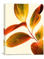 Leaf Study, Canvas Print