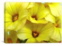 Yellow Trumpets, Canvas Print