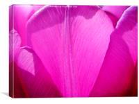 Purple Petals - Tulip, Canvas Print