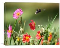 Insect in flight, Canvas Print