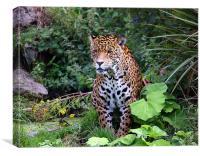 Spirit of the Jaguar, Canvas Print