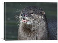 Little Otter, Canvas Print