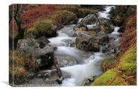Country stream, Canvas Print