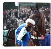 Racehorse, Canvas Print