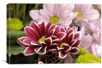 Chrysanthemums, often called mums., Canvas Print