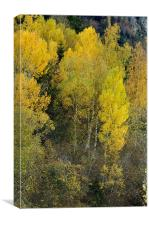 Forest in autumn, Canvas Print