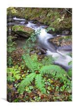 wild mountain river, Canvas Print