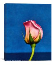 Rose, Canvas Print