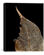 winter leaf, Canvas Print