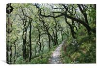 Enchanted Woodland, Canvas Print