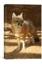 Fox in the Shade, Canvas Print