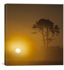 Sunrise Wisley Common, Canvas Print