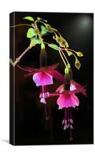 Fuchsia Digital Art, Canvas Print