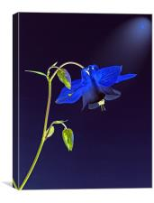Blue Bloom, Canvas Print
