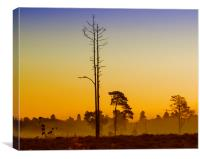 First Light Wisley Common, Canvas Print