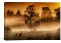 Wisley Common Surrey, Canvas Print