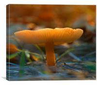 Mushroom In Sunset, Canvas Print