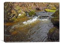 Mountain Stream, Canvas Print