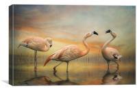 Chilean Flamingos, Canvas Print