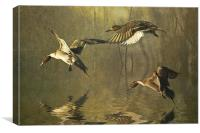 Pintails, Canvas Print