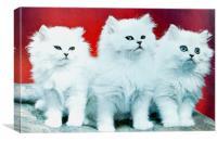 Three White Cats, Canvas Print