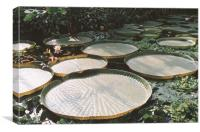 Lily Pads in Jungle Swamp, Canvas Print