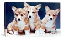 Corgi Puppies, Canvas Print