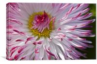 Lee on the Solent flower, Canvas Print