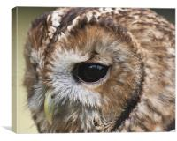 owl close up of face, Canvas Print