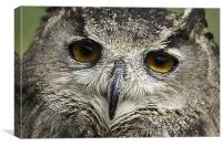 Large Tawny Owl, Canvas Print