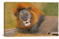 Lion at Rest, Canvas Print