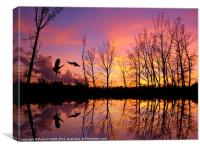Owls Sunset, Canvas Print
