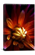 My Chrysanthemum, Canvas Print