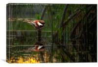 Tit and Reflection, Canvas Print