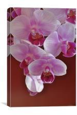 Orchids, Canvas Print