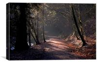 Woodland path, Canvas Print