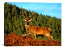 Red deer stag, Canvas Print