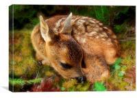Roe deer fawn, Canvas Print