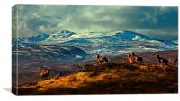 Stags at Strathglass, Canvas Print