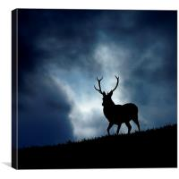 The stag, Canvas Print