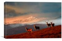 Bachelor group of stags, Canvas Print