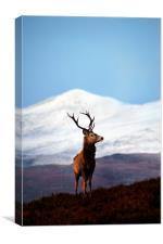 Winter stag portrait, Canvas Print