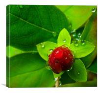 Red Bubble fruit/flower, Canvas Print