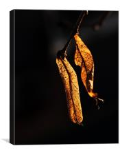 Golden leaves, Canvas Print
