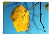 A Golden Leaf, Canvas Print