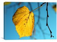 A Golden Leaf, Canvas Print
