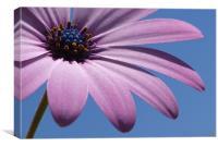 Purple Sunshine, Canvas Print