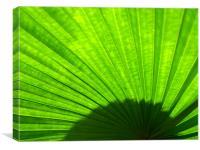 Green Fan, Canvas Print