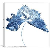 Blue Bract, Canvas Print