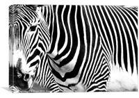 Zebra Crossing, Canvas Print